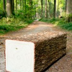 SquareTreeTrunk_img_track_woods_s