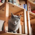 knihovna pro knihy i kocky, japonsky cedr z palet_LOGO